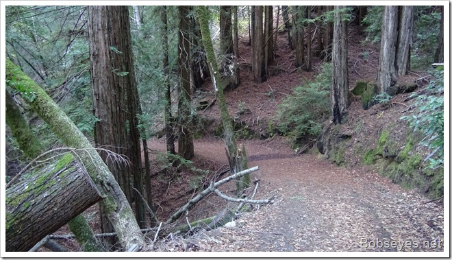 redwoodroad