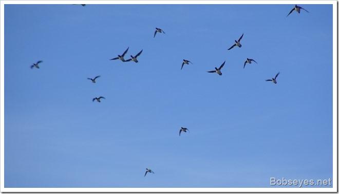 duckksfly